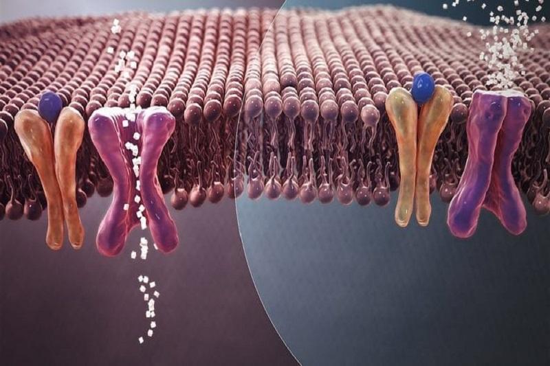 Bio Nanotechnology Treatment for Type 2 Diabetes